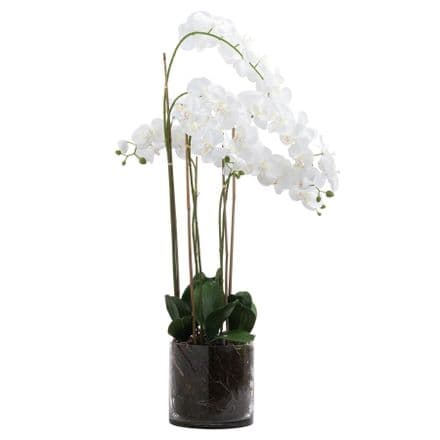 Large White Tall Orchid In Glass Pot